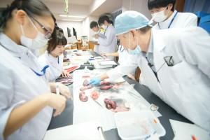 ブタの腎臓解剖実習(糸球体の観察)01